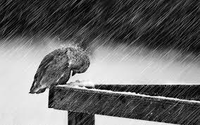 hukum mandi hujan